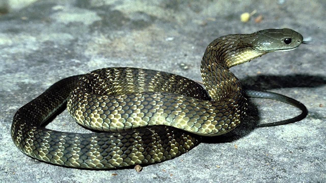 Змія вкусила жінку в Привітному