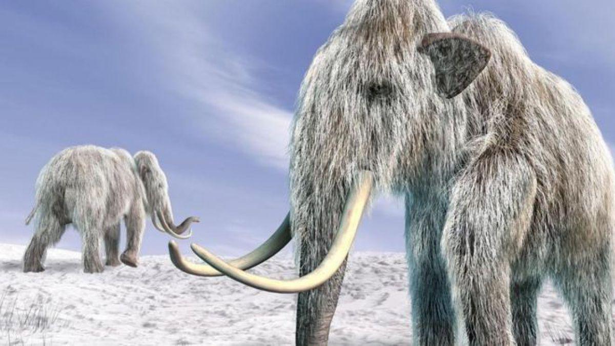 Американські вчені хочуть воскресити мамонтів: для чого це потрібно